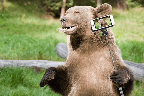 Why the Grizzly Bear Grins